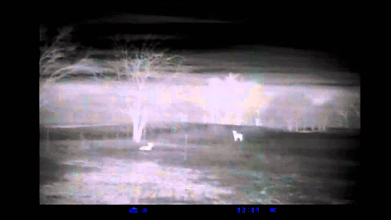 Pulsar quantum hd38a thermal monocular youtube for Thermal watches