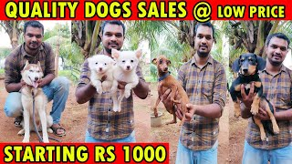 DOG FOR SALES | ALL PUPPYS SALES | Cheapest Prize | Dog Kennels | All Breeds Available