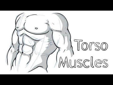 How to draw Torso Anatomy