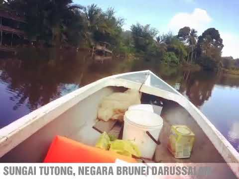 Tutong River Safari Brunei Darussalam
