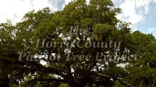 Horry County Patriot Tree Project