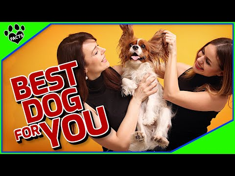 How To Choose The Best Dog For You