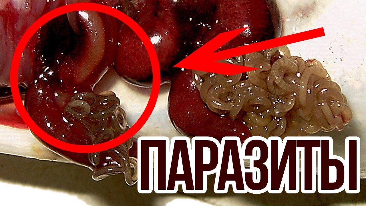 Каталог магазина «фермер центр» предоставляет возможность купить семена тыквы оптом или мелкими партиями разных сортов. Доставка заказов почтой по всей украине.