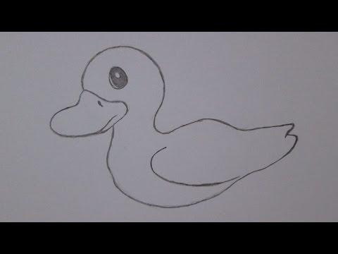 Cómo Dibujar Un Pato Youtube