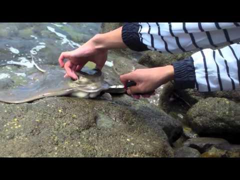 Ventura & Malibu Shark & Rays fishing