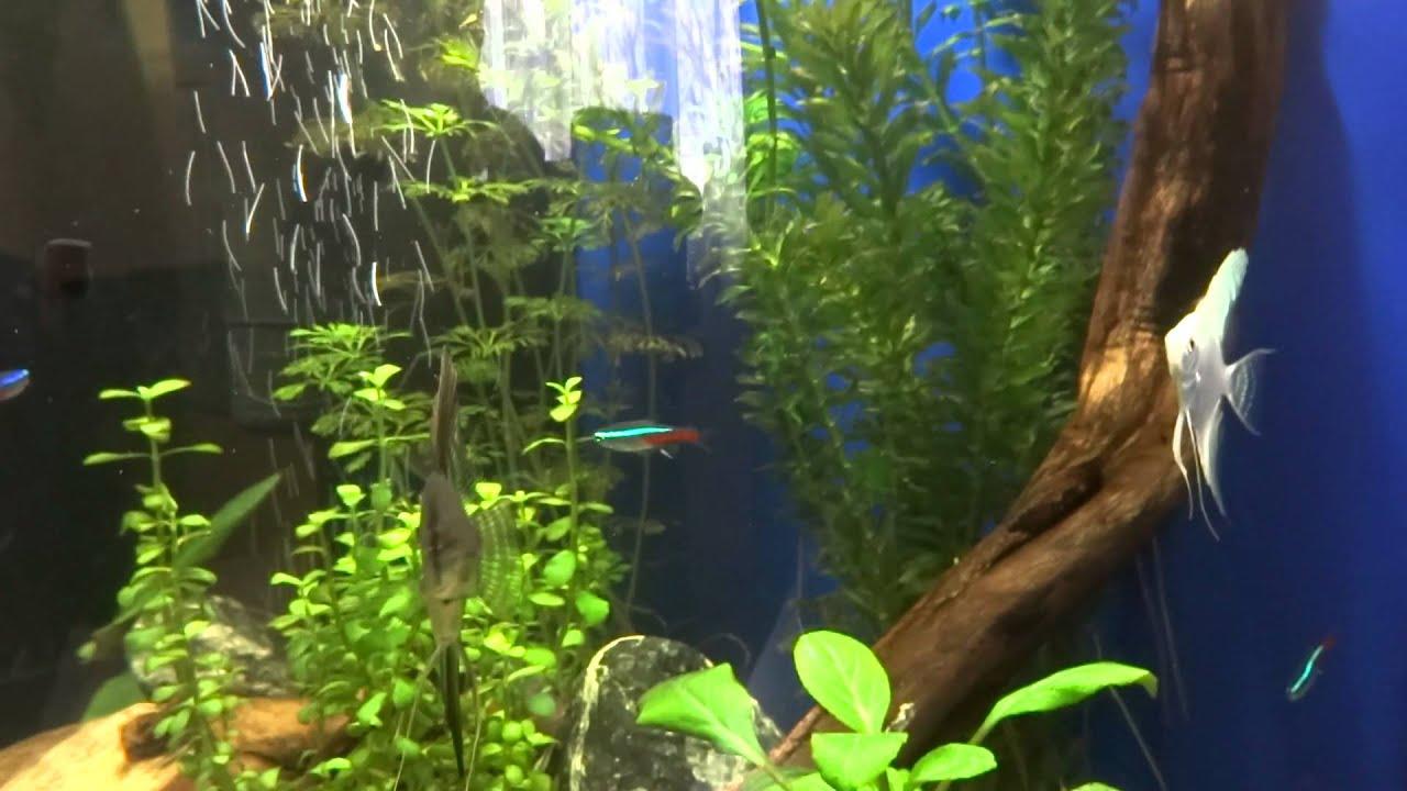 tetra aquaart 60l led lighting planted aquarium youtube. Black Bedroom Furniture Sets. Home Design Ideas