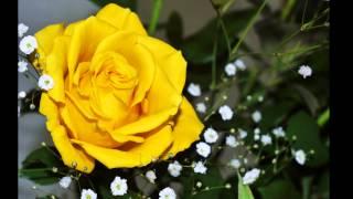 黄色いバラ.