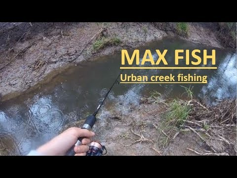 Fresh Water Creek Fishing Queensland Australia