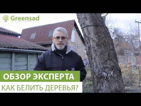 Как побелить деревья