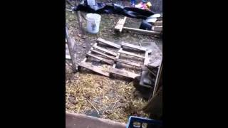 The Pallet Chicken Coop.  A Closer Look.