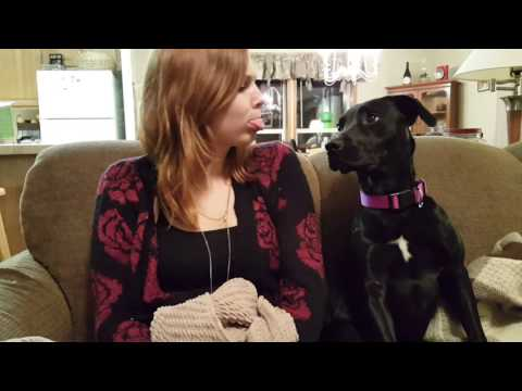 Pitbull Lab Mix Puppy Adopted | Rescued by My Daughter