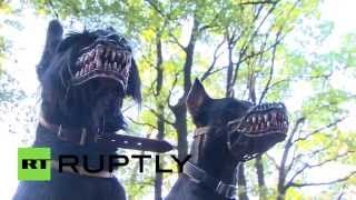 Werewolf muzzle for your dog: Latest fashion is scary as hell