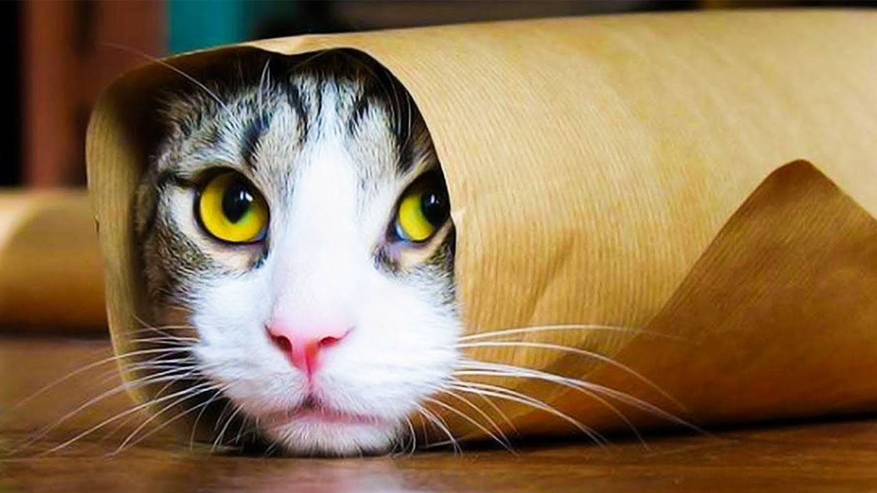 Смешные фото и видео с кошками, кого сегодня
