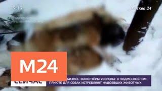 Зоозащитники рассказали об истязаниях животных в подмосковном приюте - Москва 24