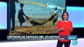 Sargazo: el alga que invade el Caribe mexicano y de Florida