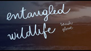 Entangle Wildlife - Sandi Glowe (Lyric Video)