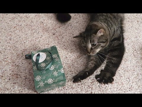 Boo Day 161 - The Last Day Of Christmas Presents - Feral Cats Winter