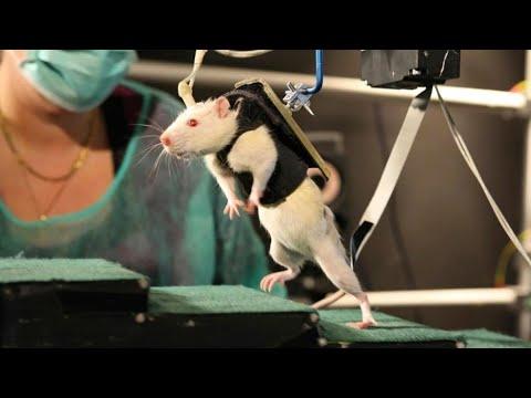 علماء سويسريون يجرون تجارب لعلاج الشلل النصفي  - نشر قبل 7 ساعة