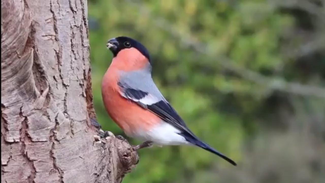 Bird Natural Life Critter Clip