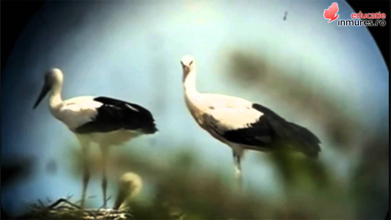 Păsările Călătoare