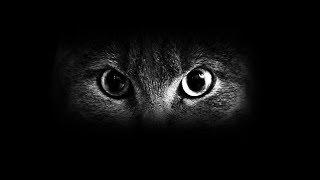 Светящиеся глаза кота, супер кот