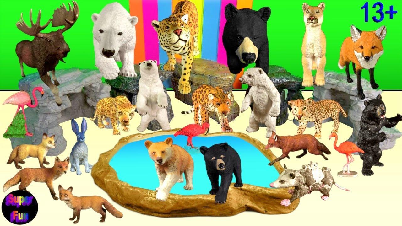 Big Cats - Zoo Animals - Jaguar Polar Bear Black Bear Panther Fox 13+