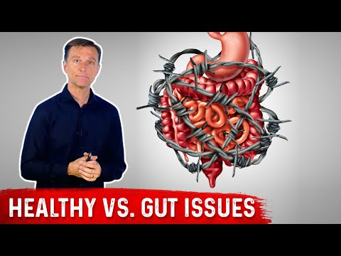 Fat-to-Protein Ratio on Keto: Healthy vs. Gut Issues