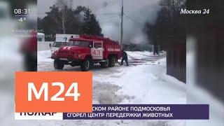 Смотреть видео В Ступинском районе Подмосковья сгорел центр передержки животных - Москва 24 онлайн