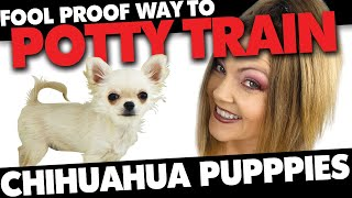 Potty Training your Chihuahua 100% Fool Proof Method | Sweetie Pie Pets