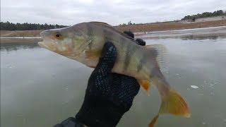 зимняя рыбалка по первому льду 2019 2020 и сразу здоровый окунь