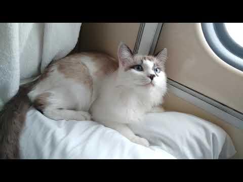 Как перевезти кота в поезде. Сколько стоит билет на кота?