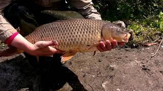 Сазан 5 5 кг рыбалка кастинговой сетью