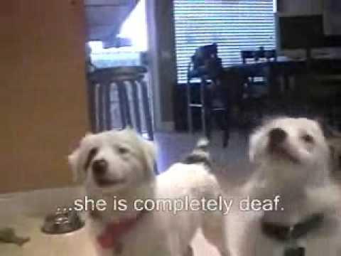 Meet Kylee & Callum Blue Kylee is Deaf