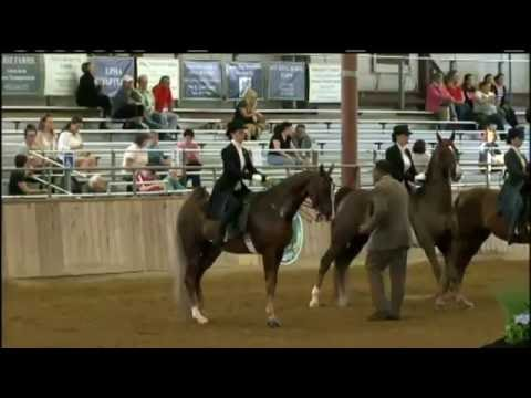 Greater Boston Horse Show 2016