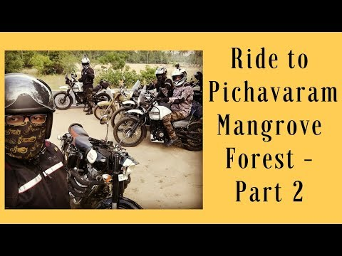 Chennai Bulls Trip to world's 2nd Largest Mangrove Forest(Pichavaram Forest) Part - 2