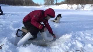 Зимняя рыбалка  Река Белая  Февраль 2016 г.