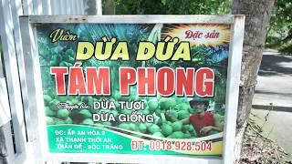 Kĩ Thuật trồng Dừa Dứa cơ bản