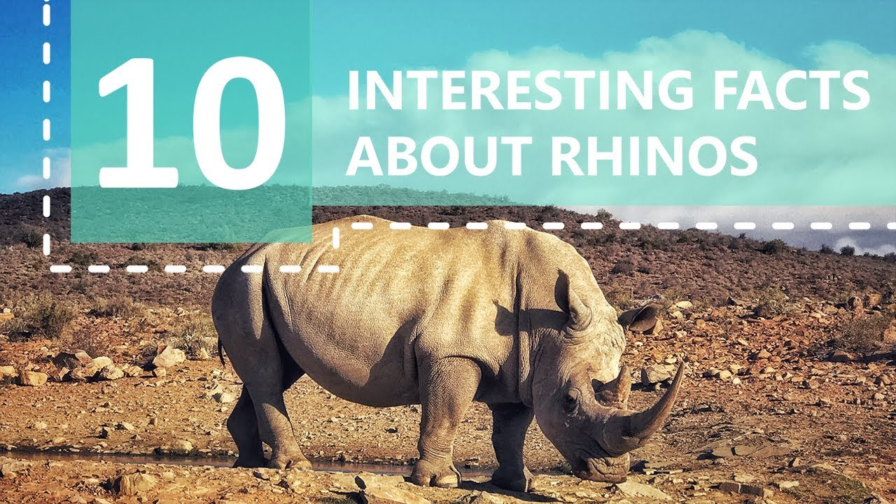 45 Wild Facts about Rhinoceroses | FactRetriever com