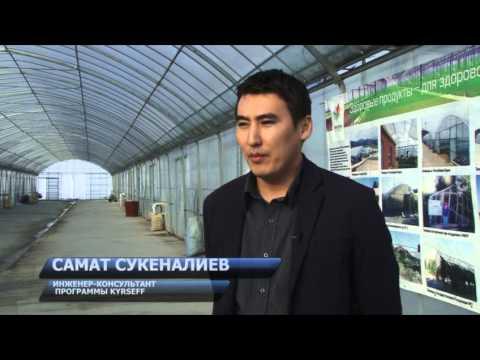 Самая современная теплица в Кыргызстане
