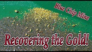 Gold recovery! Getting the gold from the Blue Chip Mine Ore.