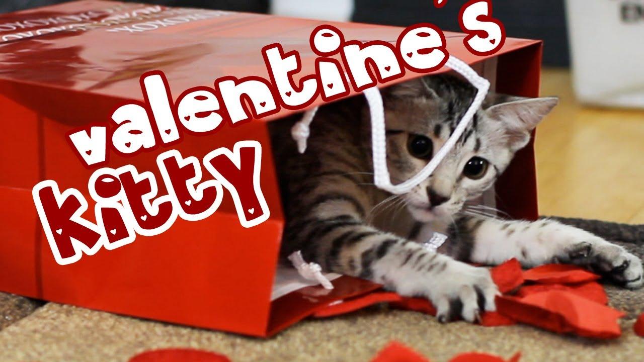 Valentine S Kitty Youtube