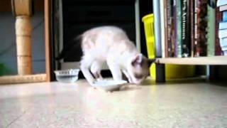 chaton joueur 2 Thumbnail