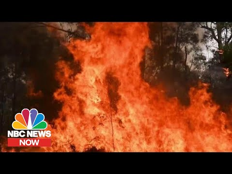 How Climate Change Affects Wildfires   NBC News Now