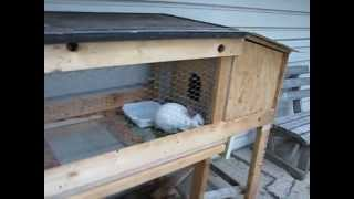 Our Rabbit Hutch