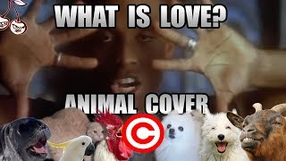 Haddaway  What Is Love (Animal Cover) [REUPLOAD]