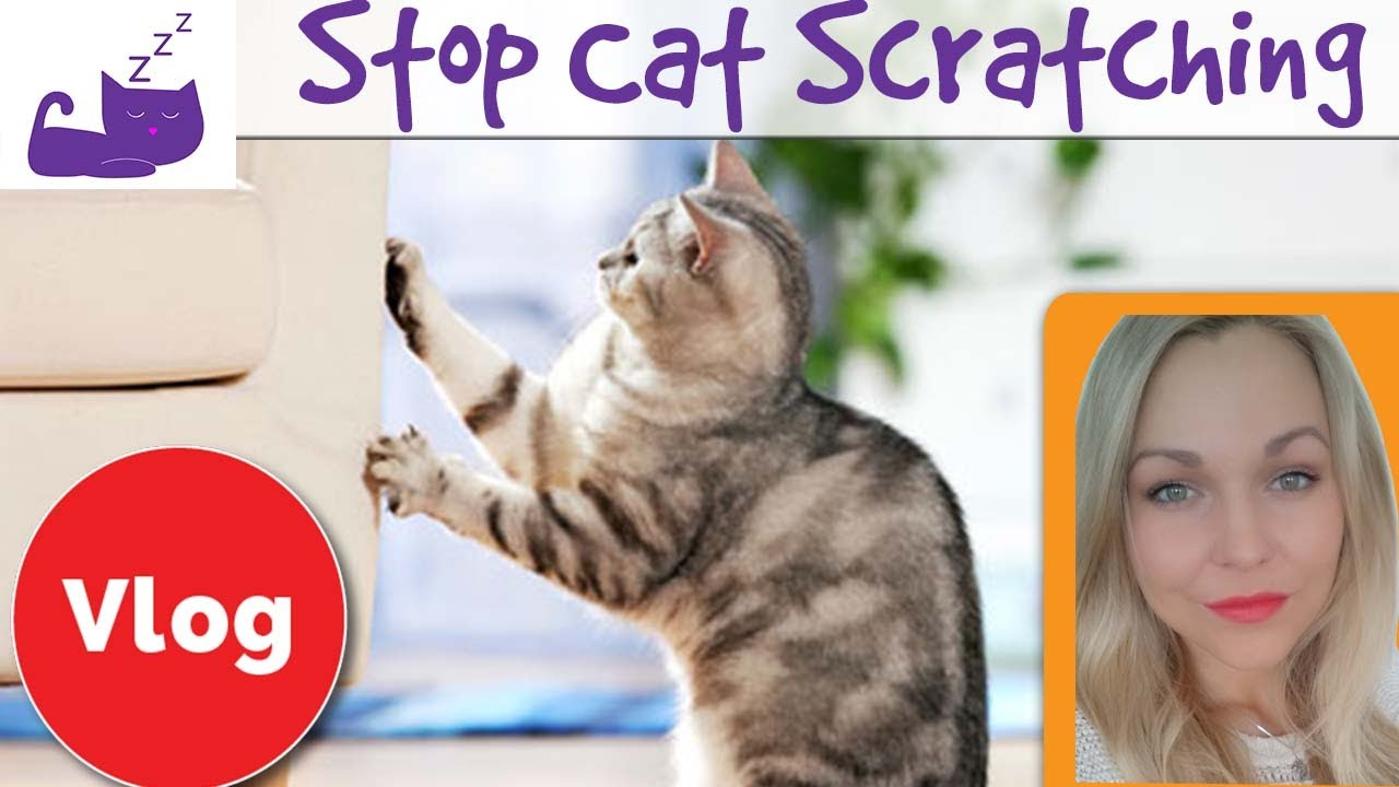 How To Stop Your Cat From Scratching Your Furniture 3 Tips
