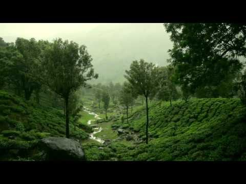 Kerala - Into God's Own Country