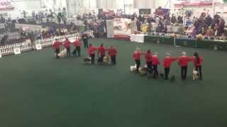 Dublin North Dog Training 2015 Obedience Display