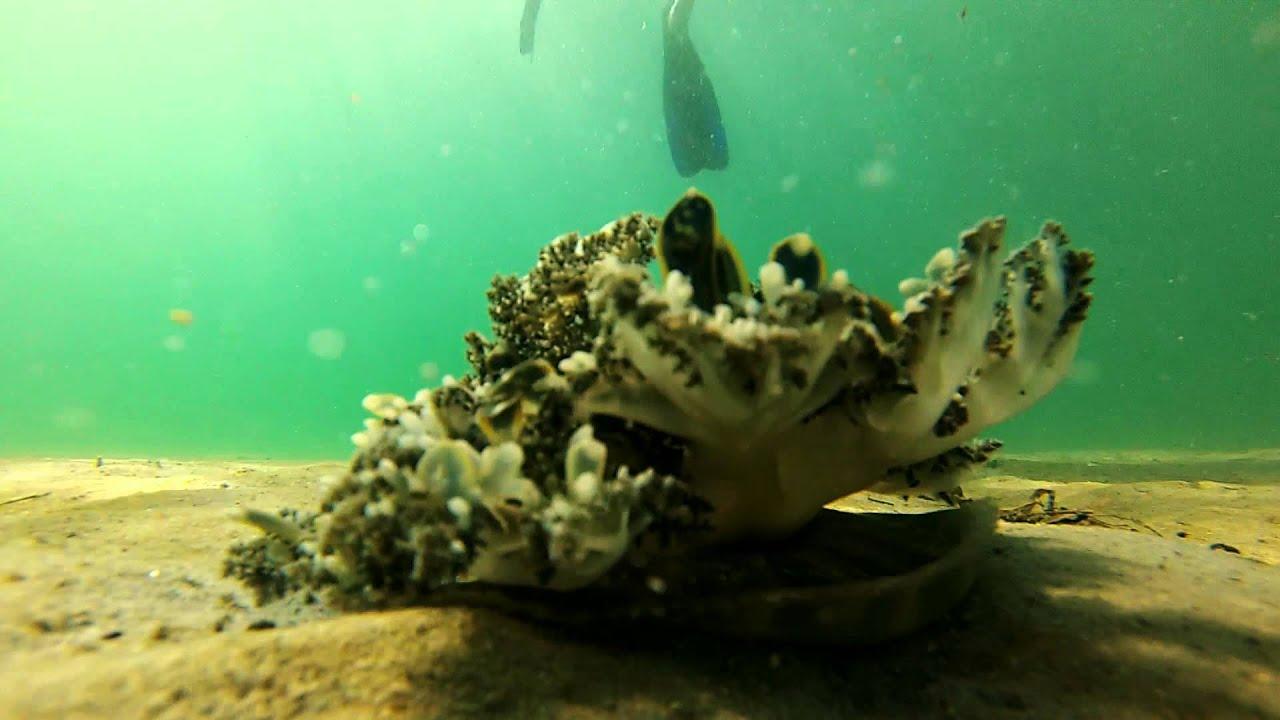 West Palm Beach Snorkeling Peanut Island