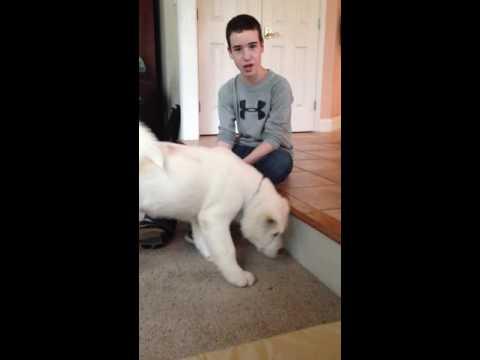 Son Meets Akita Dog for First Time 2_26_13 kumason com